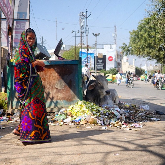 The cows are truly worshiped here.  This one is resting in the shade in a pile of food next to the dumpster, with this beautiful woman wearing gorgeous colors in the foreground. India was not for the faint of heart. That is for sure.