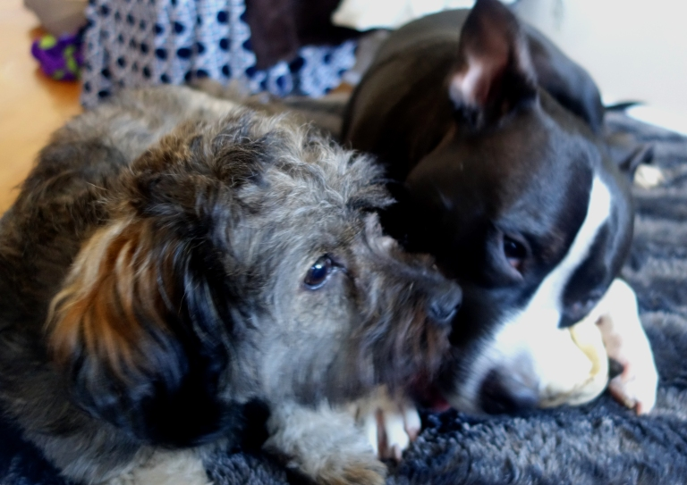 both doggies